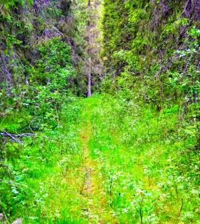 swedish midsummer forest